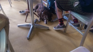 Dog sitting under table